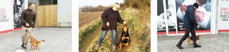 Mammen og omegns Hundeklub